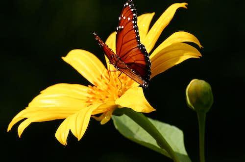 Butterfly on the slopes of Rincon de la Vieja