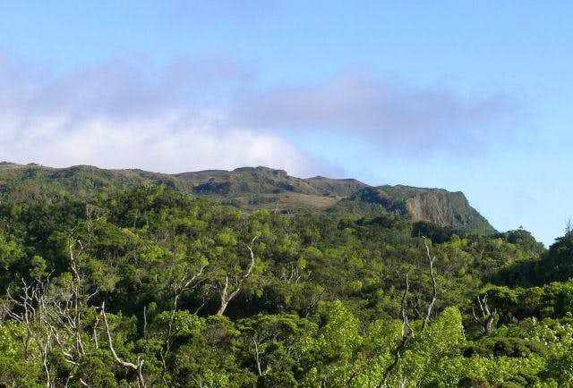 Summit of Kawaikini from the NW.  Viewed from a ridge top near Kapoki Crater