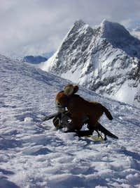 Mr. Donkey on the summit of Mönch