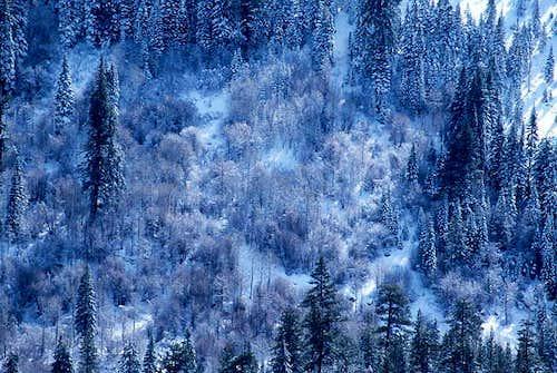 Trees on Mountainside