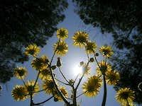 Many suns