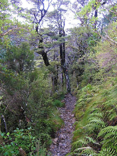 Typical view of lower Scotts Track