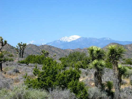 San Gorgonio from Joshua Tree