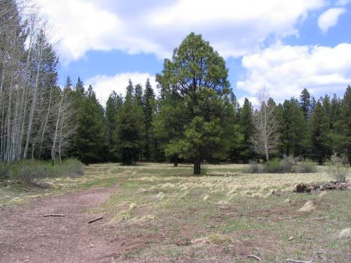 The meadow at trail s end - Mormon Mountain