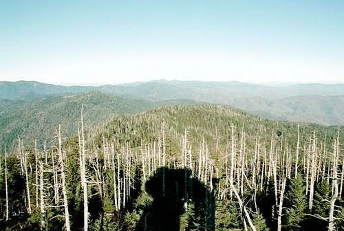 Northeast of Clingmans Dome