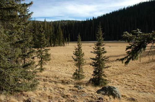 Little Colorado Meadows