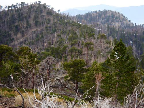 Mount Hawkins From Throop Peak