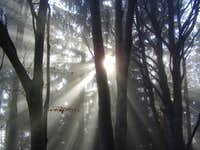 Sunrays in the fog