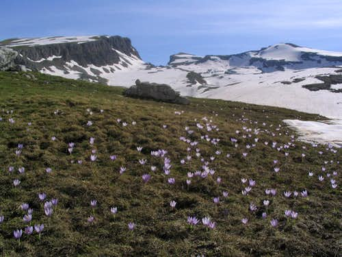 flowers at 2000 meters, Gamila summit in the background