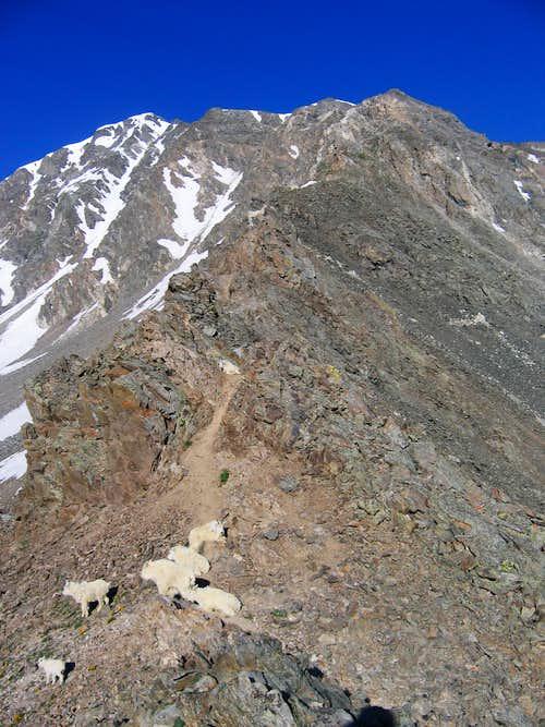 Mtn. Goats
