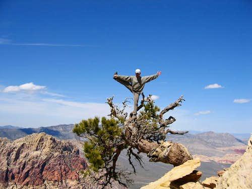 Rainbow Peak Tree Yoga