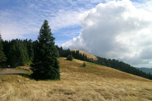 Meadows near the summit of Mary\'s Peak