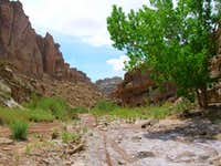 The wash in Chute Canyon