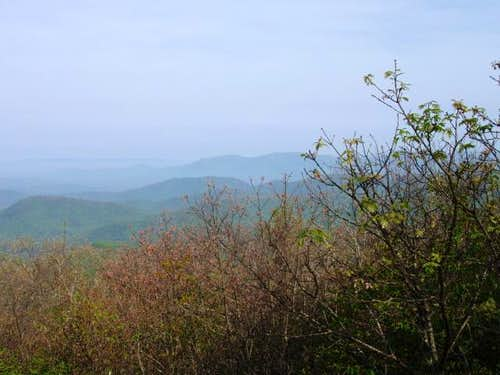 View from the top of Springer Mountain