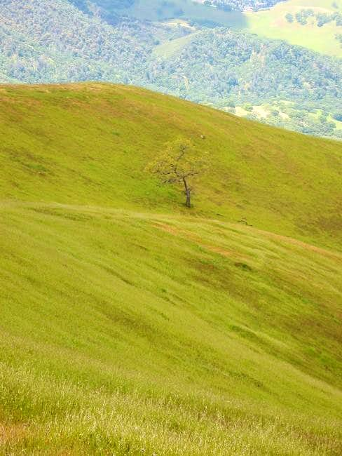 Lone Oak tree and steep...