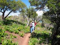Mountain Mahogany and Wildflowers