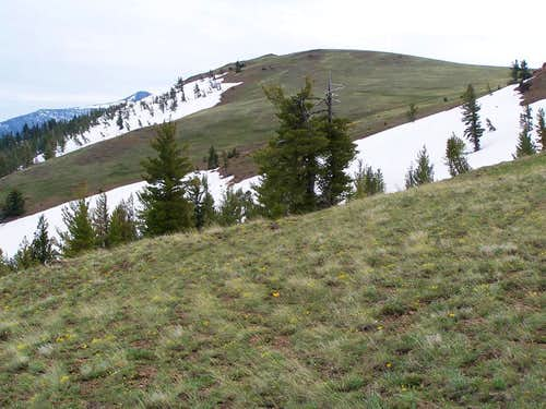 Baldy as you enter the summit meadow