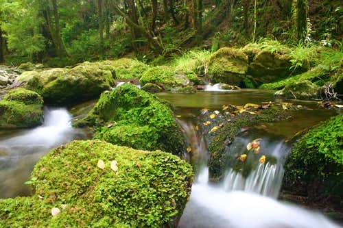 Lush forest in the Nelson Region