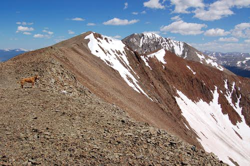 Mount Guyot's South Ridge