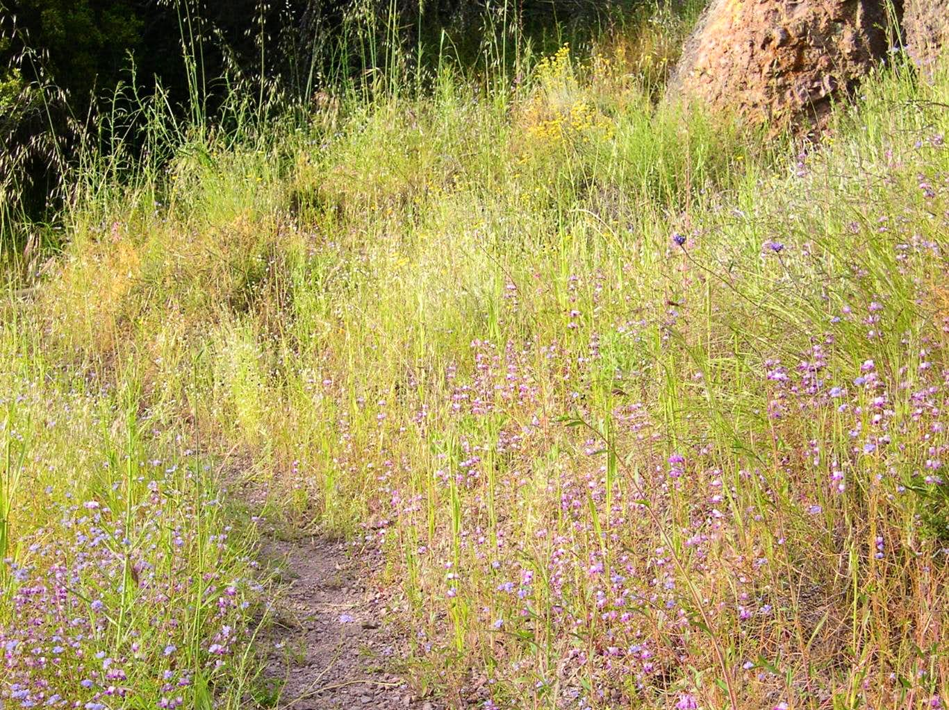 Wildflowers of the Pinnacles