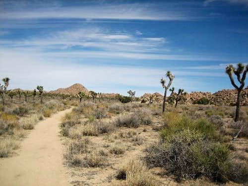 The Boy Scout Trail