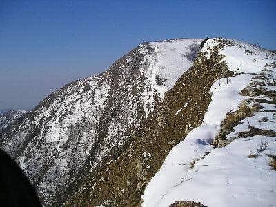 Alpesisa