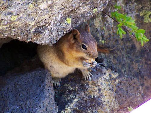 Squirrel feasting on granola bar