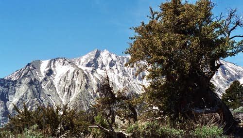 Mt. Williamson from Symmes Saddle
