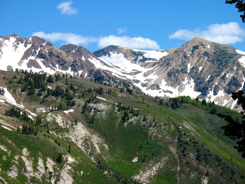 Close-up of Alpine Ridge