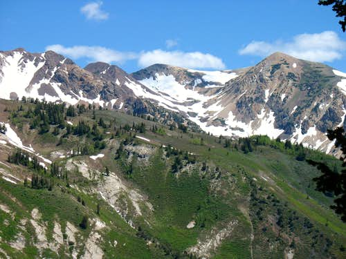 Close-up of Alpine Ridge