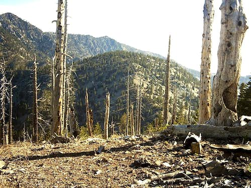 Timber from Bighorn