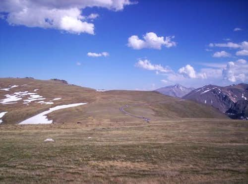 Elk at 12,000ft .Trail Ridge Road