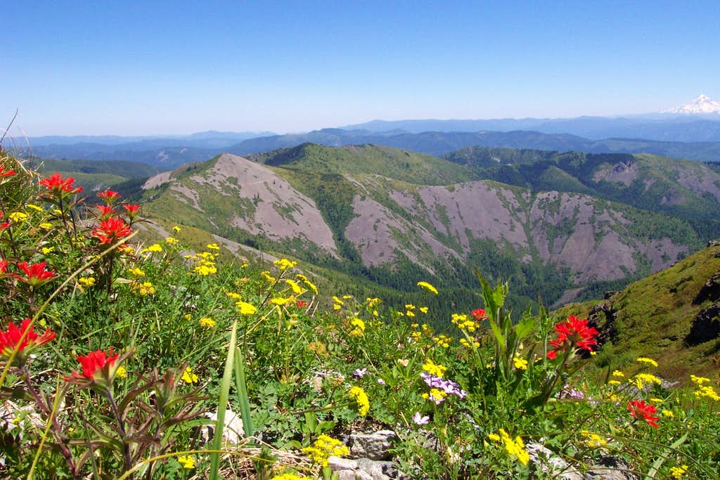 Flowers on Silver Star Summit