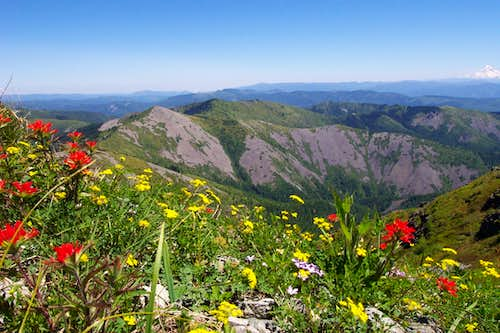 Flowers on Silver Star Summit