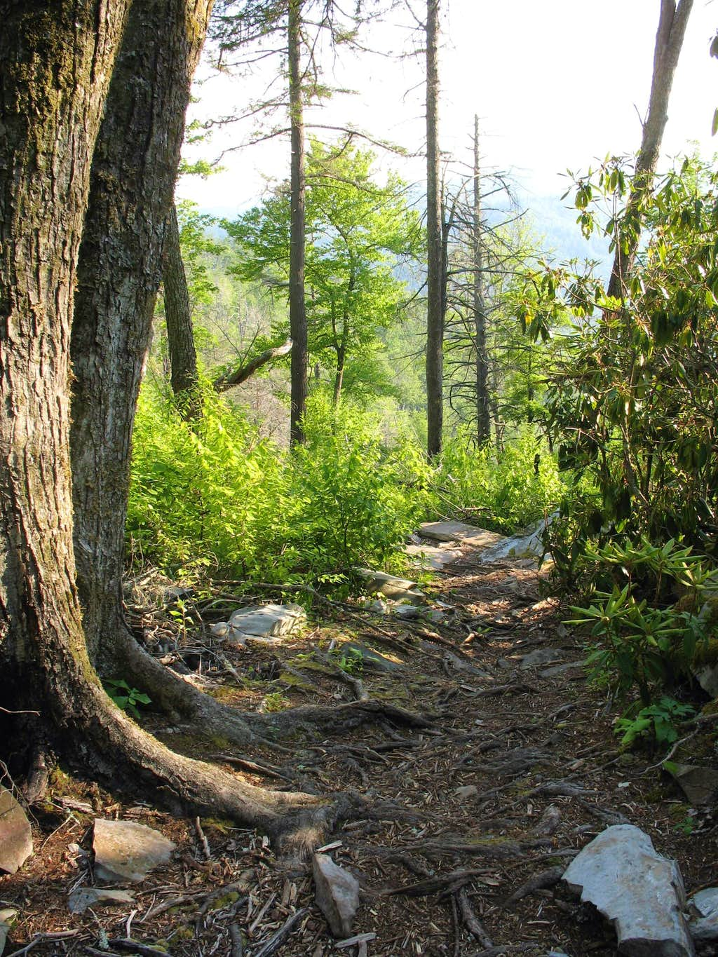 Babel Tower Trail