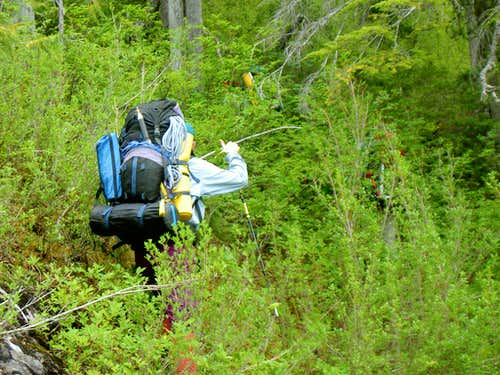 In Praise of Bushwhacking