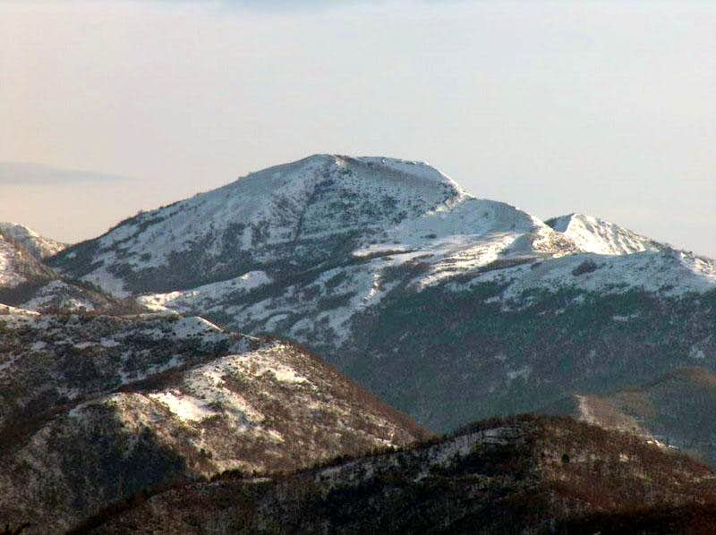 Alpesisa snowy