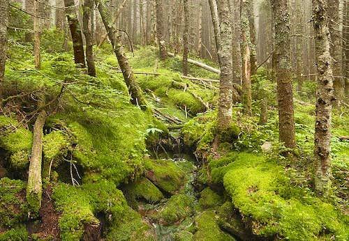 Mount Pierce Forest