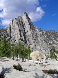 Prusik Peak & Goat