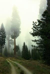 A lonely road in the sequoia grove