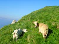 Goats on Tour D'ái