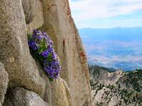 Color and Granite