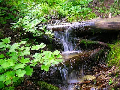 Bear Canyon Spring