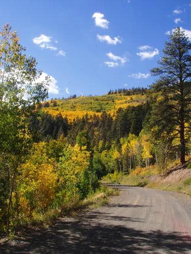 Aspen along the Hell's Backbone Road