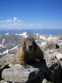 S summit marmot