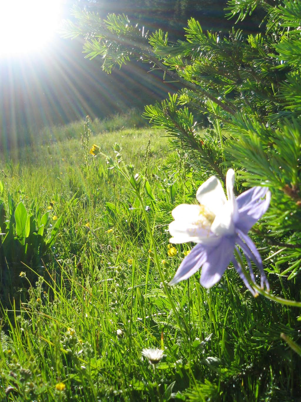 Morning flower en route to Sunlight