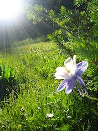 Morning flower en route to Sunlight