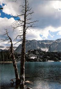 Dead tree at the edge of Lake Marie