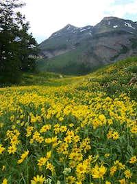Lower meadow in July