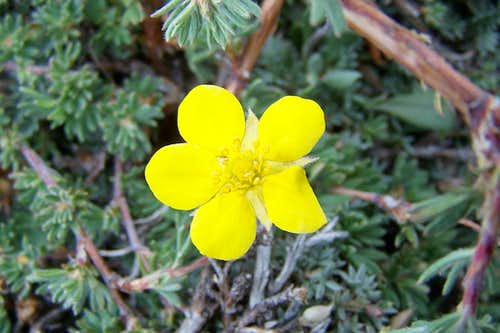 Small Flower on Borah